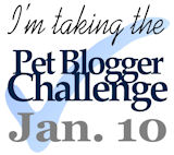 Pet Blogger Challenge